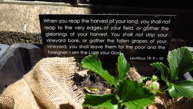 methodist-church-planting-c-stephen-lamb-oct-2012-all-rights-reserved-touching-the-earth-lightly-126-of-156